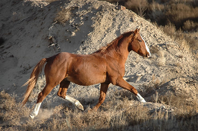 Wild Horse Trotting Near Route 6 #3