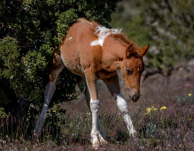 Wild Foal Scratching Back on Tree #2