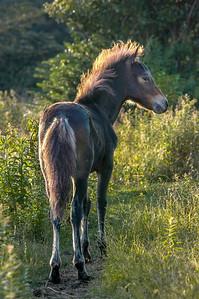 Wild Pony Foal #2, MR