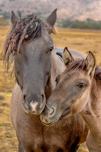Wild Horse Mare and Foal BHWS #1