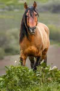 Long Mane Wild Horse RTF #1