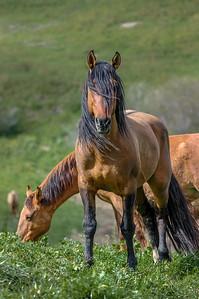 Long Mane Wild Horse RTF #2