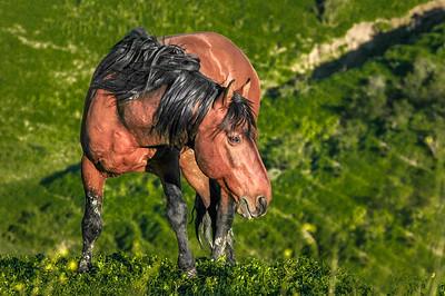 Wild Horse Portrait #2, RTF