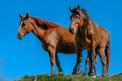 Two Wild Horses, RTF