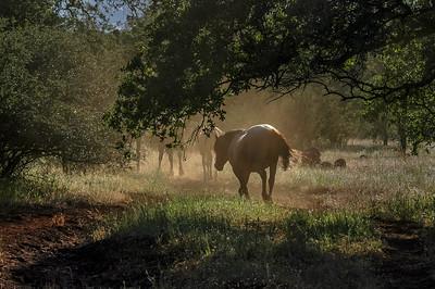 Backlit Wild Horse Under Tree