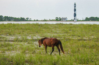 Wild Horse and Cape Lookout Lighthouse #1