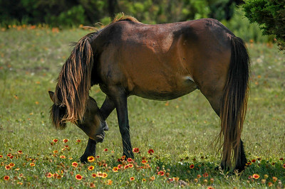 Wild Horse and Flowers SB