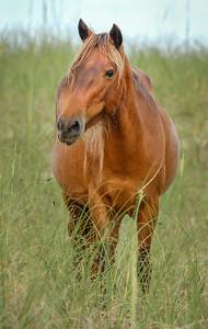 Wild Horse Portrait #2 SB