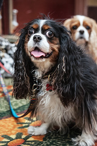 Photo Bombing Dog (and so adorable)