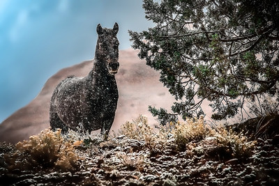 Black Horse in Snowfall