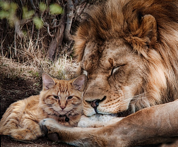 Kitten and Big Cat