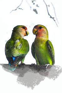 LoveBirds 1
