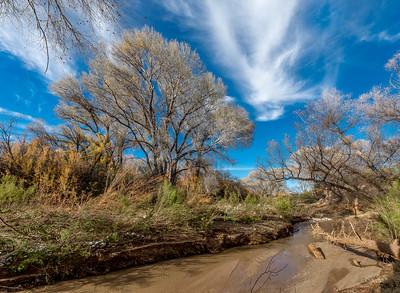 San Pedro River, AZ #5