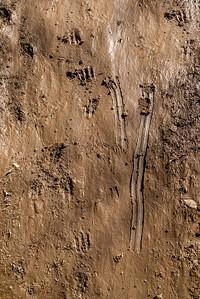 Deer Tracks in Slippery Mud #3