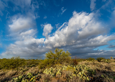 Big Sky and Paloverde #3