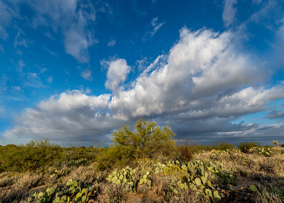 Big Sky and Paloverde #4