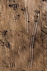 Deer Tracks in Slippery Mud #1