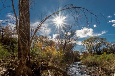 San Pedro River, AZ #3