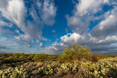 BR - Big Sky and Paloverde #1