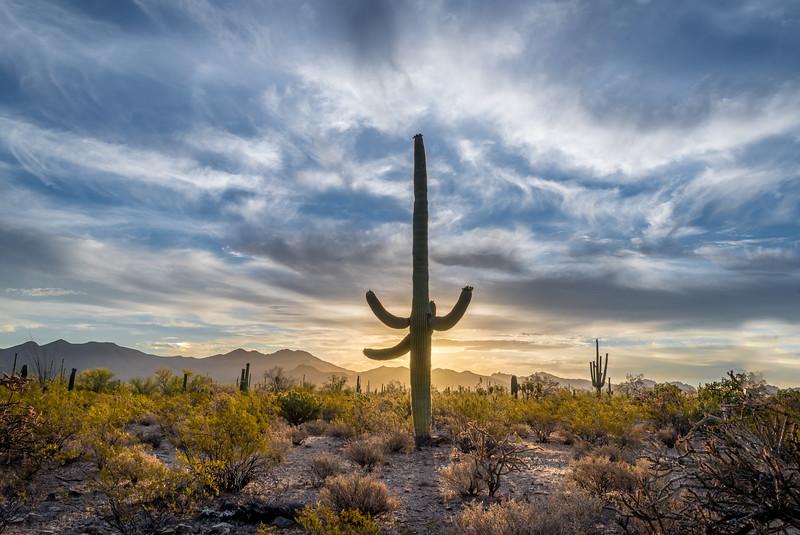 I-11 - Mature Saguaro Backlit #3