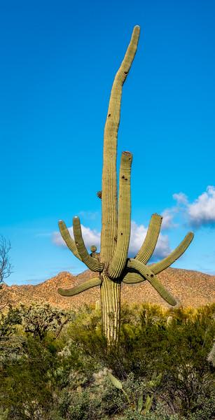 Unusual Sonora North of Tortoise Trail #2