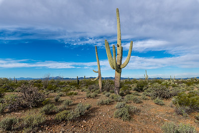 I-11 - Big and Small Saguaros South of Sinagua Rd