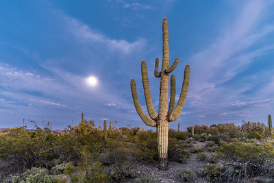 I-11 - Big  Saguaro South of Sinagua Road With Moon #1