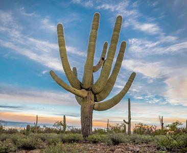 I-11 - Unusual Saguaro South of Sinagua Road #3