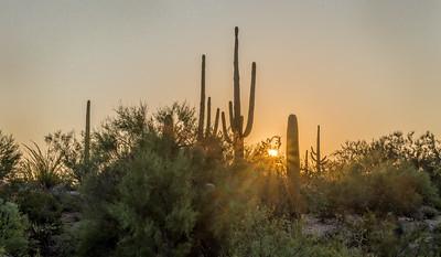 PR RV -  Sunburst & Saguaros
