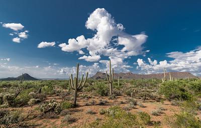 PR RV -  Saguaros, Panther Peak, Cumulus - Wider