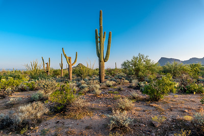 PR RV -  Saguaros with Busterville & Panther Peaks