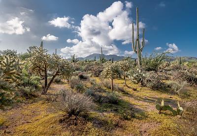 PR RV  - Diverse Desert Plants and Wasson Peak