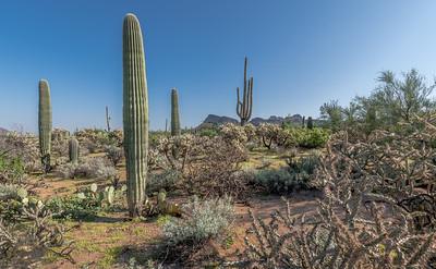 PR RV - Landscape With Saguaros #1
