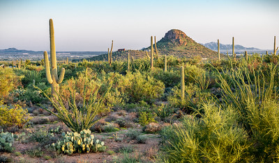 PR RV -  Desert and Busterville Peak #1