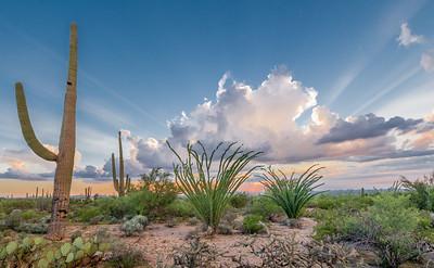 PR RV -  Two Ocotillos & Saguaro at Sunset