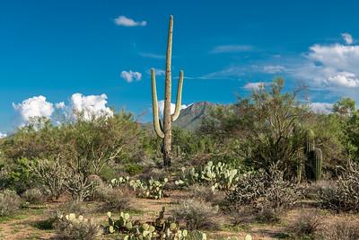 PR RV -  Saguaro & Wasson Peak