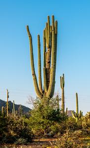 PR RV  Saguaro #9