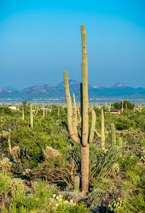 PR RV - Saguaro #2