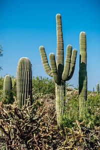 PR RV - Landscape With Saguaros #3