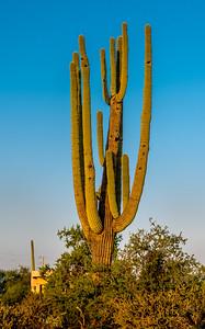 PR RV - Saguaro #10