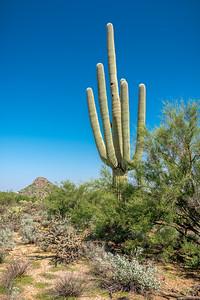 PR RV - Saguaro #6a