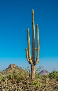 PR RV - Saguaro #3