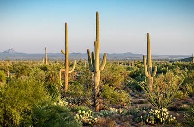 PR RV - Landscape With Saguaros #2
