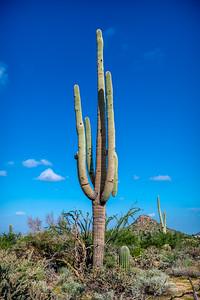 PR RV -  Saguaro #8