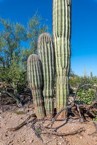 PR RV - Two small and One Big Saguara