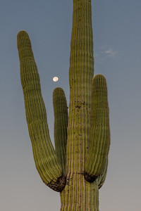 PR RV - Saguaro and Moon