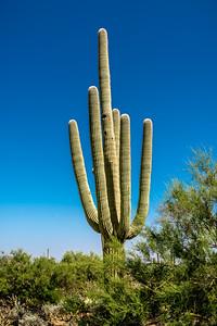 PR RV - Saguaro #6b