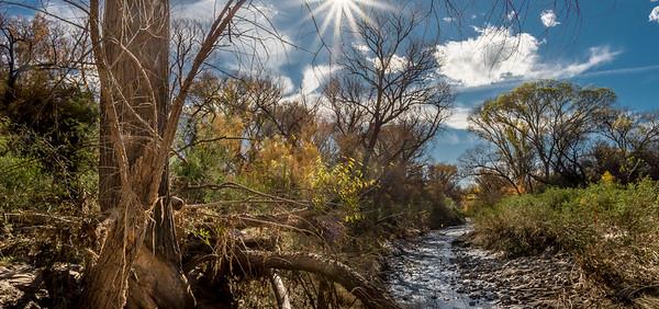 San Pedro River, AZ #2