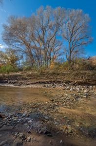 San Pedro River, AZ #4
