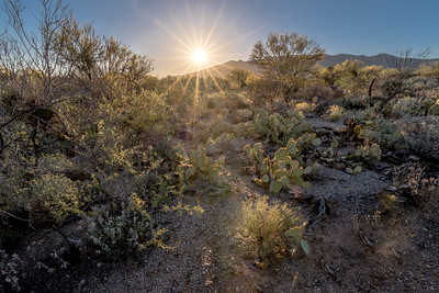 BR - Sunburst With Prickly Pear Cactus and Other Plants